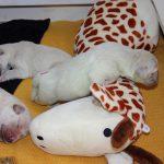 Reutje 'rood' heeft voor de giraffe gekozen om overheen te bungelen, hahaha