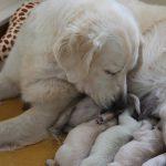 De verzorging hoort ook bij het moederschap, Skylar doet dat erg goed!