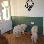 Skylar (links) eet voor het eerst weer bij de andere honden (rechts staat Dyonne); dat is vaak een hele stap voor de kersverse mama's