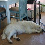 Skylar slaapt nu af en toe buiten de werpkist, ook dat is een hele 'overwinning' ;-)