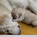Moeder/kind-liefde.... om te smelten....