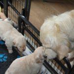 Dyonne komt even buurten en de pups zijn uiteraard weer nieuwsgierig :-)