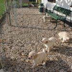 Op vrijdag even aan de voorkant van het huis in de zon, het is toch nog wel fris in de schaduw voor het jonge spul