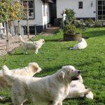 Wat een geluk met het weer (zonnetje en warm) en wat een boel honden hebben we nu opeens ;-) (de pups zitten links in een ren)