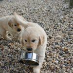 Reutje 'geel' heeft besloten dat hij het waterbakje wel eens kon apporteren! ;-)