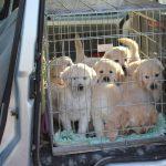 Voor het eerst in de auto op weg naar de Zorgboerderij