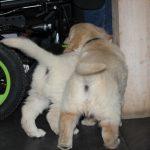 Ze schrikken nergens van, ook niet van de wielen van de rolstoelen