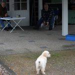De Puppytest: als 'start' moest ik elke pup op een bepaald punt neerzetten waarna de tester ging kijken of de pups naar hem toe wilden komen