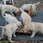 De pups krijgen hun maaltijden inmiddels uit individuele bakjes