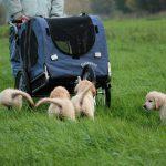 """Als mijn vader weer terug richting huis rijdt rennen de pups hard achter hem aan (""""hé, waar ga je met ons 'huis' naar toe??!"""")"""