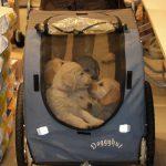 Eenmaal binnen hebben we de pups eerst in hun eigen tempo te laten wennen