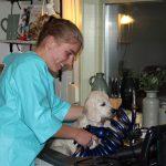 Alle pups gaan bij mij altijd schoongewassen en een beetje bijgetrimd naar huis, Ruby helpt mij daarbij!