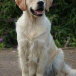 Lucan als jonge hond